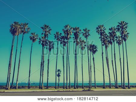California high palm trees on the beach near the ocean blue sky background vintage toned and stylized retro style Santa Barbara