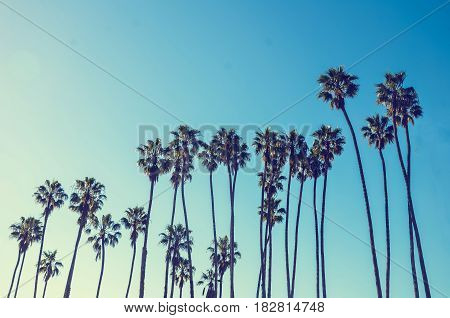 California high palm trees on the blue sky background