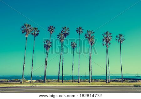 California high palm trees oon the beach near the ocean blue sky background vintage toned and stylized retro style Santa Barbara