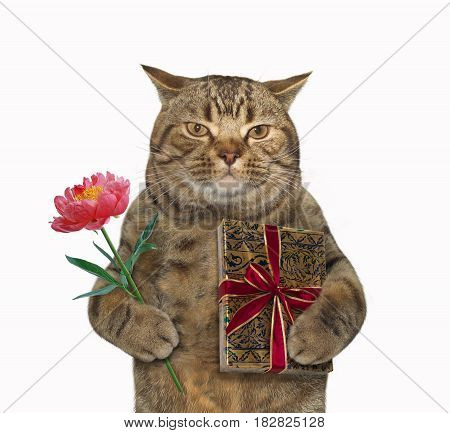 The cat in love is holding a flower in one paw and a present in the other. White background.