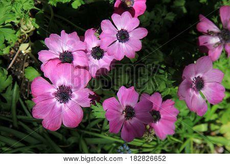 Horizontal image of beautiful purple flowers in garden