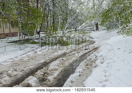 Spring landscape after April snow storm in Dnepr city Ukraine