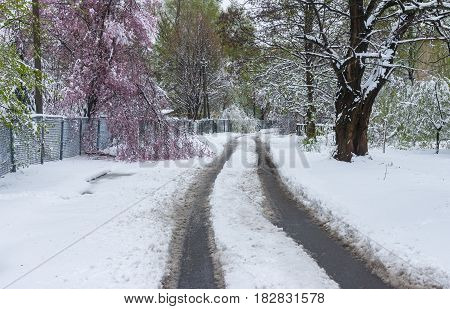 Spring landscape after snow storm in Dnepr city Ukraine