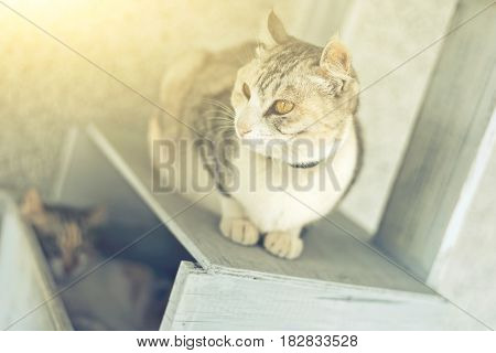 cat and her little daughter sit on a cat tree