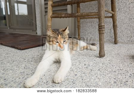 cat sit on the corridor in outside