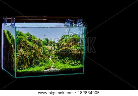 image of aquarium tank with a variety of aquatic plants inside.