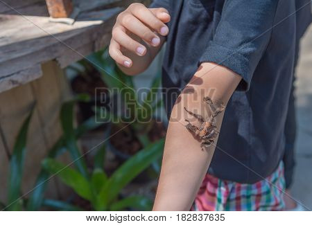 Asian Boy Have Leaf Insect On His Hand.