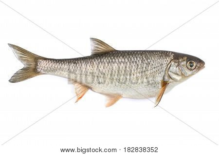 Fish ide isolated on white background .