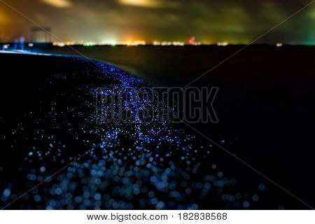 Bio luminescence. Illumination of plankton at Maldives. Many particles at black background.