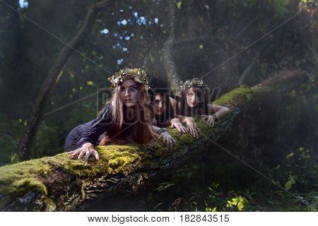 Witches In Dark Forest .