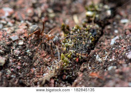 Springtime. Macro shot of an ant .