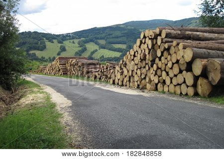 Wood Harvesting In The Jeseniky Mountains