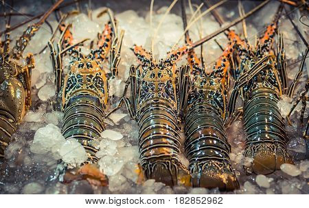 Spiny Lobster, shrimp fresh seafood market Thailand