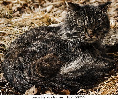 Cat lay on the grass, sleepy cat, animal, homeless cat
