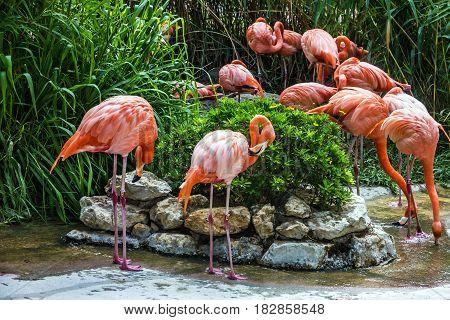 flamingo family in Lisbon zoo, Portugal nature