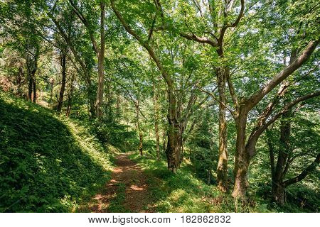 Lane, Path, Way For Light Walking In Summer Deciduous Forest Between Woods Trees. Beautiful Landscape.