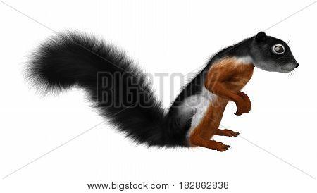 3D Rendering Prevost Squirrel On White