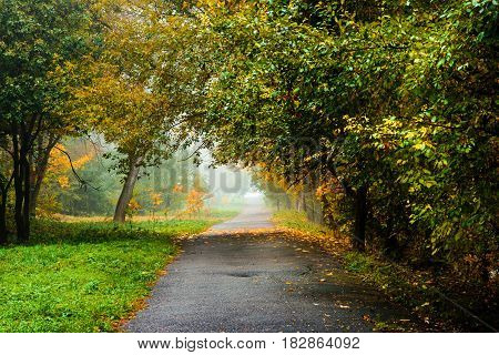 Road In Autumn Forest. Autumn Landscape