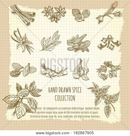Vintage kitchen poster with hand drawn spice collection. Vector illustration