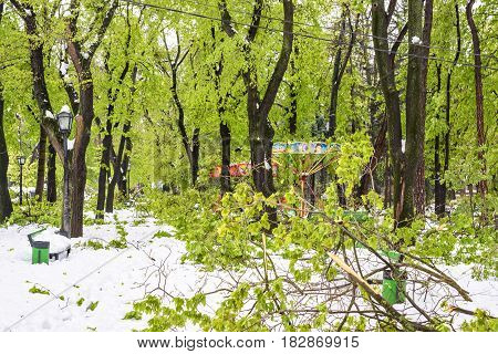 CHISINAU, MOLDOVA - APRIL 21, 2017: Heavy snow on frozen city, spring anomaly, natural cataclysm, falling green trees disaster, general emergency state, exceptional situation