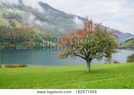 View of fresh Tree in front of the lake with green and red leaves in autumn
