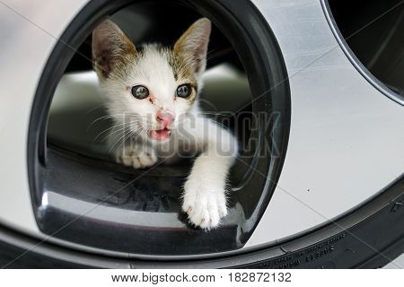 Cute adorable little white nomadic hungry kitten on the car wheel