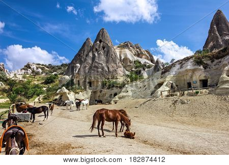 Horses in mountain landscape. Cappadocia, Anatolia, Turkey