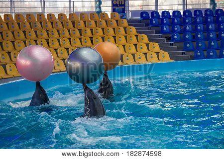 Kiev, Ukraine - April 22, 2017: Dolphins with balls dolphinarium show Kiev