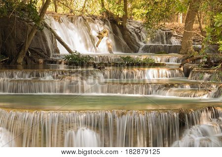 Deep forest stream waterfall natural landscape background