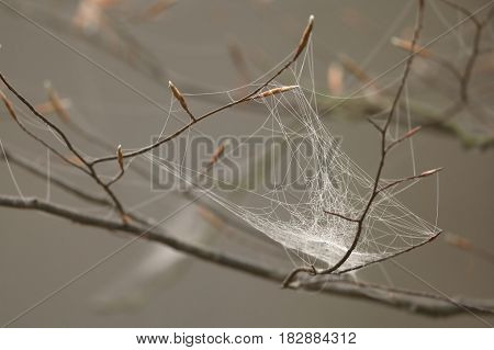 The Morning dew and water drops in spider web