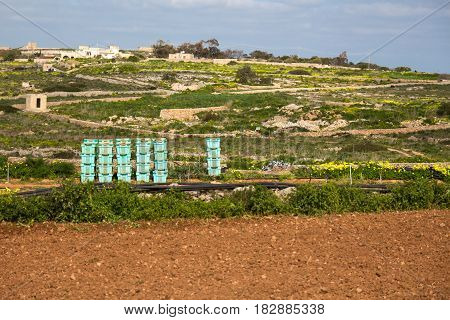 Vegetable crates stacked in a field ready to be packed during harvest. Bahrija Malta.