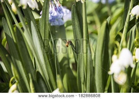 A bee working among spring flowers on sunny day