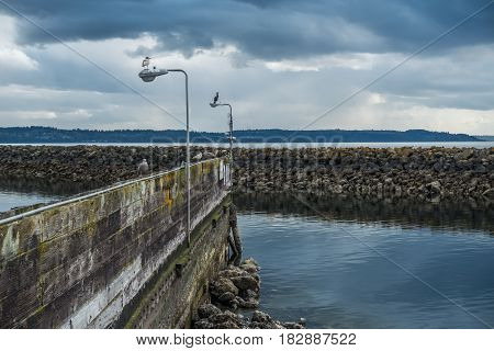 Birds sit on a wall near a breakwater in Des Moines Washington.