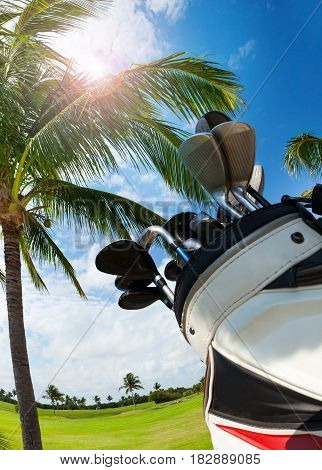Close-up picture of golf bag with different types of clubs against sunny palm trees, bottom view