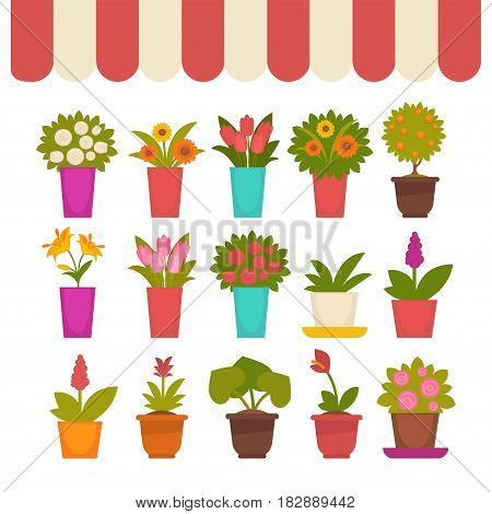 Fresh spring flowers in pots vector collection under outdoors striped tent covering for windows. Vector colorful poster in flat design of decorative blossoms for houses and inside keeping.