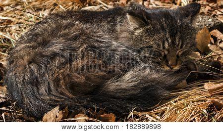 Cat lay on the grass, sleeping cat, animal, homeless cat