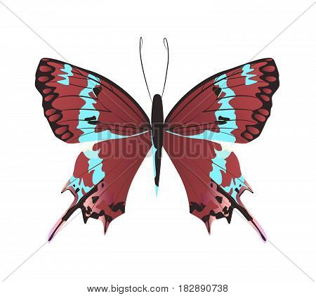 Isolated beautiful butterfly on white background. Red and turquoise colors.
