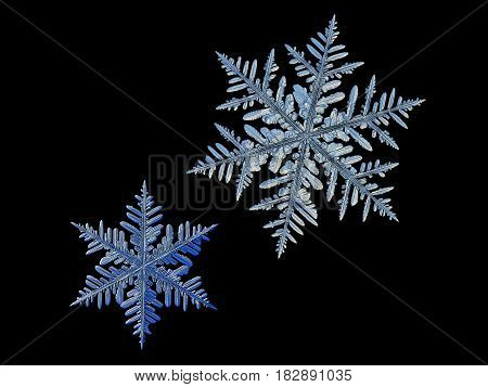 Two snowflakes, isolated on black background. This set composed from photos of real snow crystals: very big stellar dendrites with six long, elegant arms with many side branches and complex shape.
