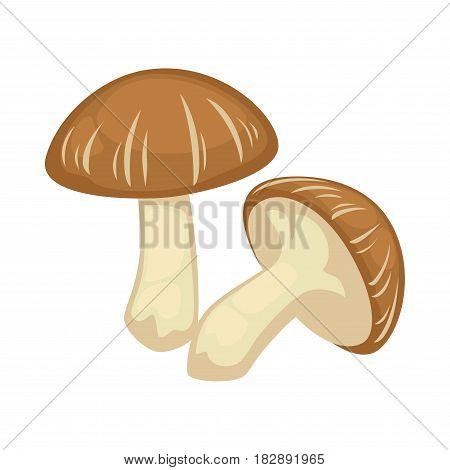 Two shiitake mushrooms on white background. Brown cracked cap and honky leg creates Lentinula edodes fungus. Pair of wood uncooked boletus graphic icon. Vector illustration cartoon style flat design