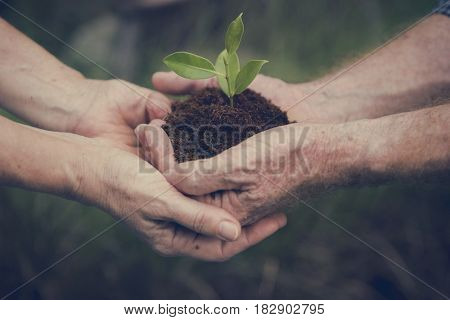 Environmental Conservation Plant Sustainability
