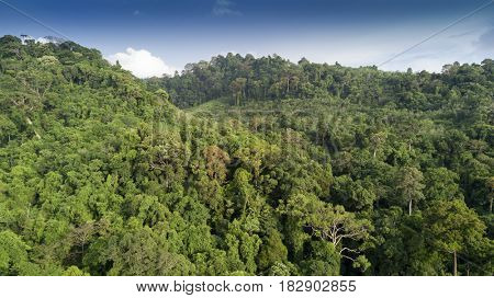Rainforest. Aerial view of forest trees canopy