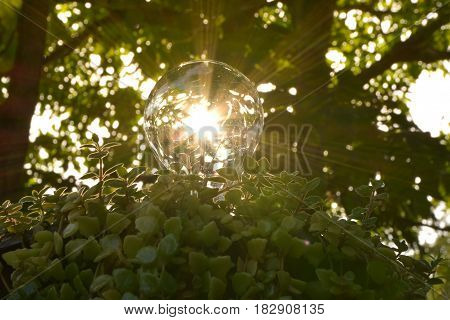 Light bulbs with green plants for saving energy concept.
