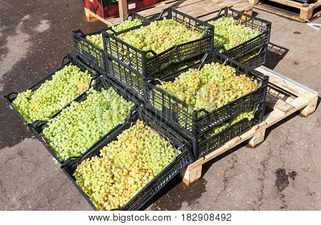 Fresh sweet grapes ready for sale at the farmers market