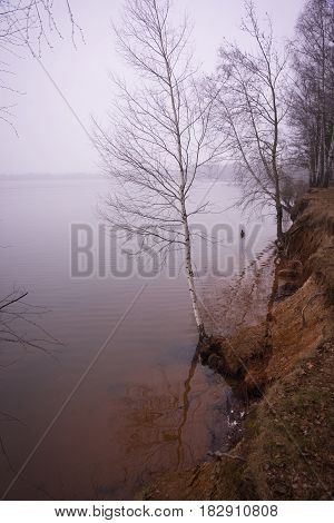Several Trees Almost Inside The Waters Of Mozhayskoe Sea Flooded In Spring
