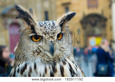 An owl looking for its next meal