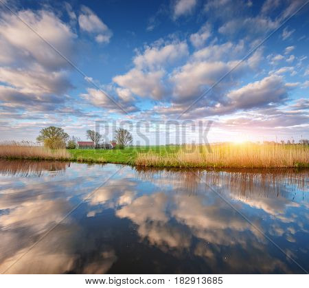 Colorful blue sky with clouds reflected in water houses near the canal trees green grass and yellow reeds at sunrise in Netherlands. Amazing scene. Colorful rustic landscape in Holland in spring