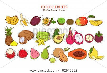 Colored fresh natural exotic fruits set with organic tropical products in hand drawn style isolated vector illustration