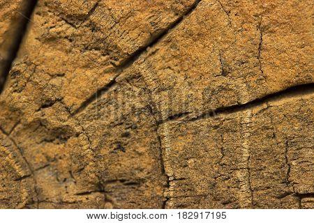 Closeup Of Warm Flat Wood Texture With Cracks.