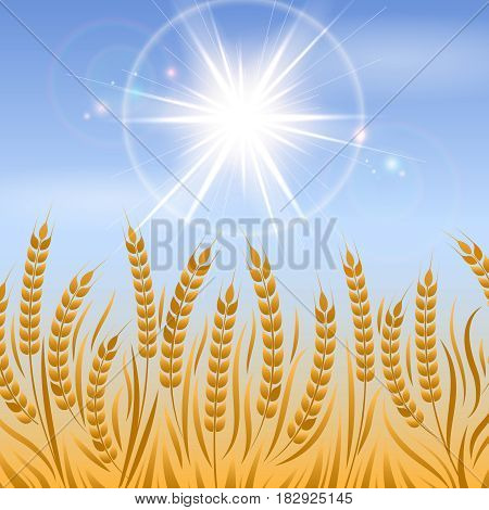 Field of wheat landscape. Vector agriculture background design