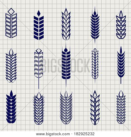 Grain ears collection on notebook page. Vector wheat rye and barley ear set foe bakery beer farm etc